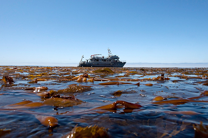 floating kelp