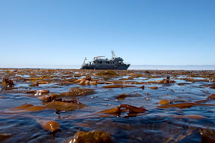 floating kelp